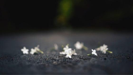 Bloom Again