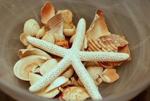 Magic seashell
