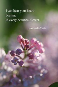 Poetry by Alexandra Vasiliu