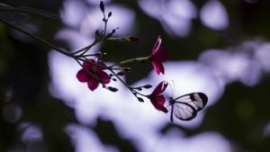 Whenever I Think Of You - Poem by Alexandra Vasiliu, Author of BLOOMING