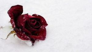 If You Are Heartbroken - Poem By Alexandra Vasiliu, Author of BLOOMING