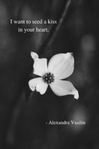 Poetry Book by Alexandra Vasiliu