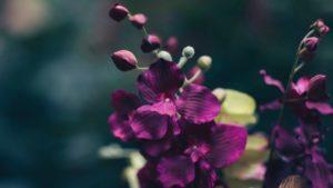 Poem by Alexandra Vasiliu