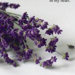 Love Poem Alexandra Vasiliu